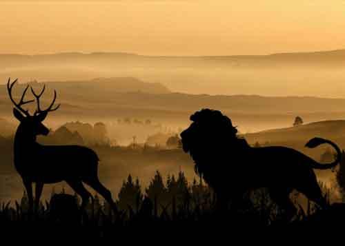 A lion hunting a deer at nightfall.